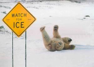 Polar-Bear-Ice